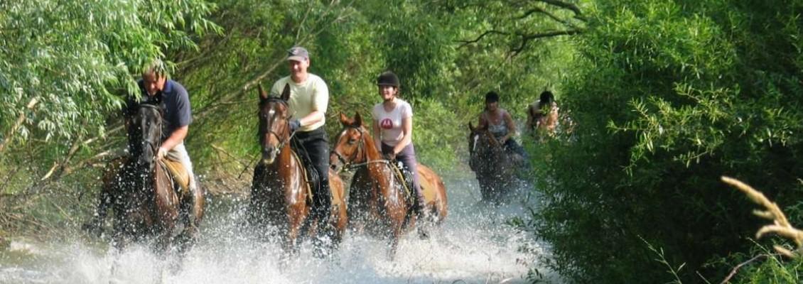 Heste og rideanlegg