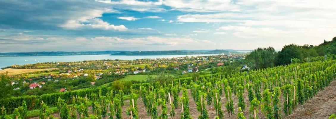 Balaton's vindistrikt
